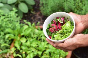 équiterre – De la terre à l'assiette : une approche 360° pour bâtir un système alimentaire durable